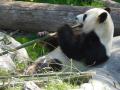 Zoo_DSCN2259_gw