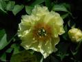 2Niagara_Garten_DSCN2828_gw