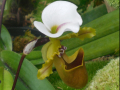 03_Garden_Fog_DSCN4022