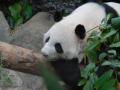 15_Zoo_DSCN4742