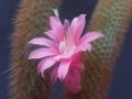 03_Garden_Flower_DSCN3940