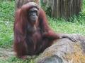 15_Zoo_DSCN4711