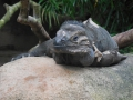 15_Zoo_DSCN4717