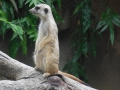 15_Zoo_DSCN4722