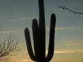 18_Saguaro_DSCN7944_w