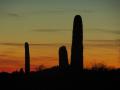 18_Saguaro_DSCN7949_w