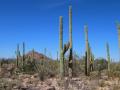 18_Saguaro_IMG_2528_w