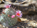 18_Saguaro_IMG_7736_w