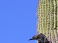 18_Saguaro_IMG_7863_w
