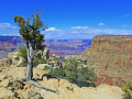 24_Grand_Canyon_IMG_8128_w