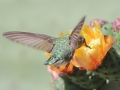 19_Hummingbird_IMG_7997_w