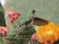 19_Hummingbird_IMG_8004_w