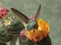 19_Hummingbird_IMG_8007_w